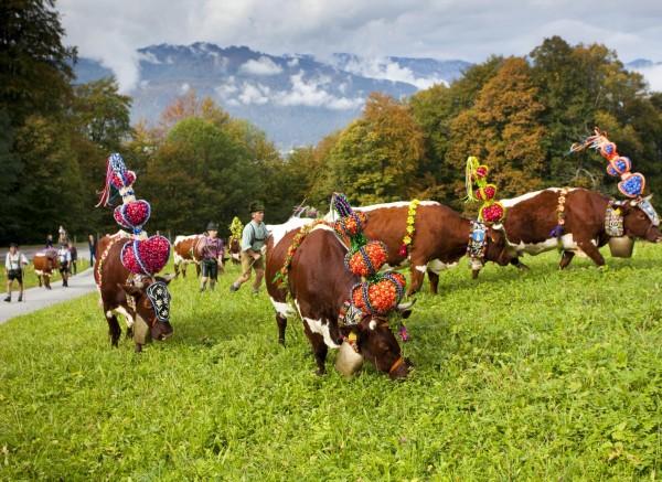 Almabtrieb Berchtesgaden